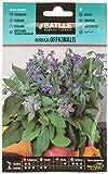 Semillas Hortícolas - Borraja officinalis - Batlle