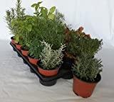 Sin marca Bandeja de Planta aromática variada (Maceta de...
