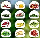 Chili Seed Set | 12 variedades de semillas de chile desde...