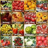 Set de Semillas de Tomate 16 x 10 semillas Tomate Mezcla...