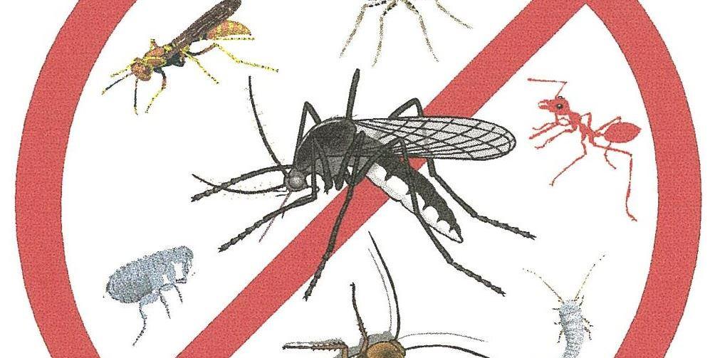 5 Plantas fáciles de cultivar repelentes contra mosquitos