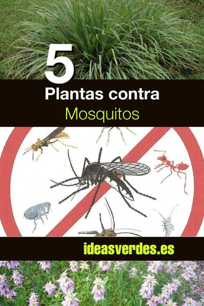 plantas repelentes contra los mosquitos