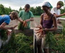 Viaja por el mundo cambiando trabajo por alojamiento y comida
