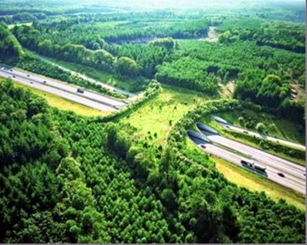 Wildlife Overpasses Around The World Working With Nature, Not Against