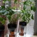 botella-jardi-florero-reciclaje-DIY-muy-ingenioso-2