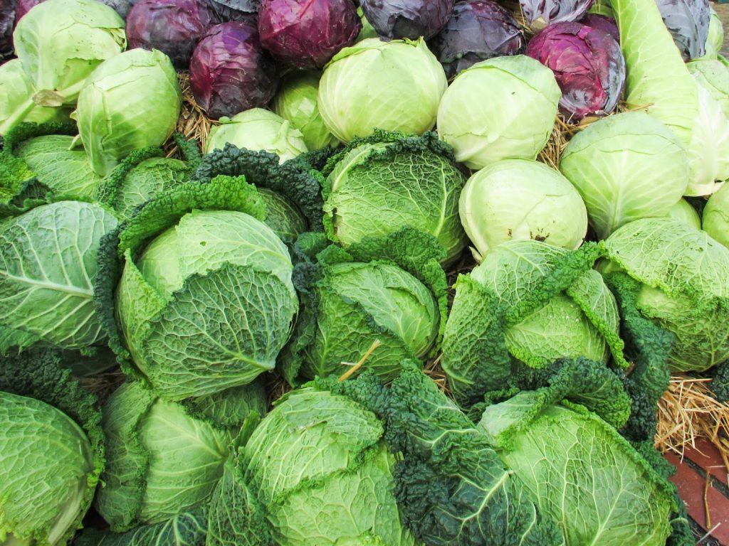 comidas saludables - col rizada