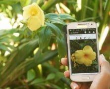 3 Aplicaciones para Identificar Plantas desde el movil