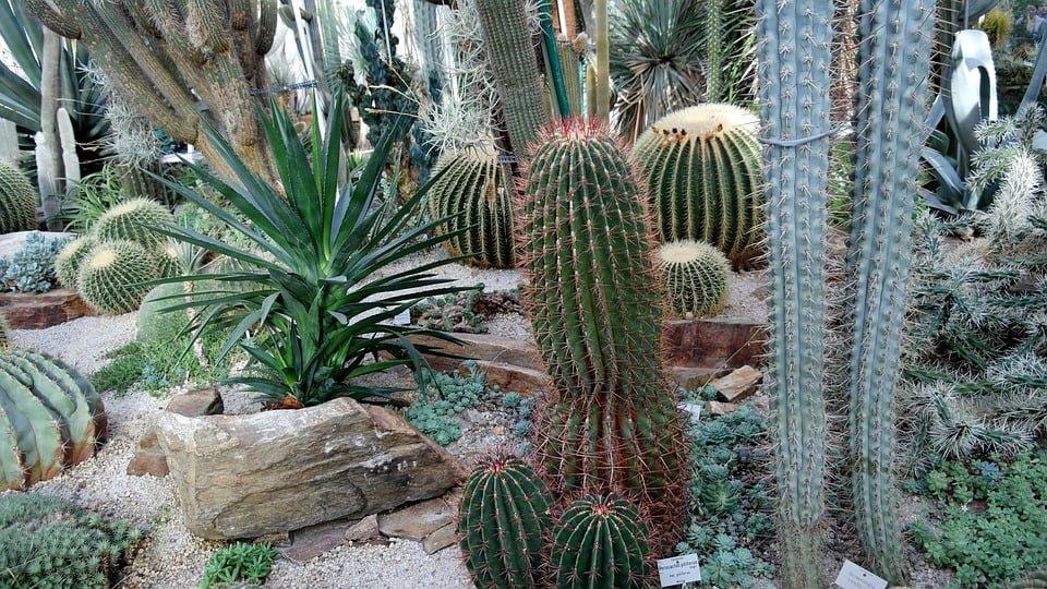 cactus-1142368_960_720