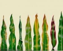 Enfermedades En Tus Plantas, Esta Aplicación te ayuda A Solucionarlo