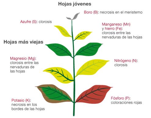 deficiency-symptoms-at-a-glance-es