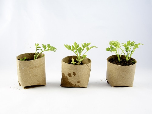 Use-Toilet-Paper-Tubes-As-Starter-Pots