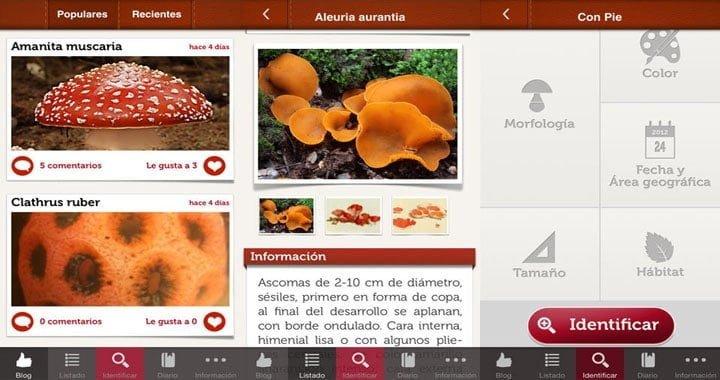 funginote-la-app-para-conocer-hongos-y-setas