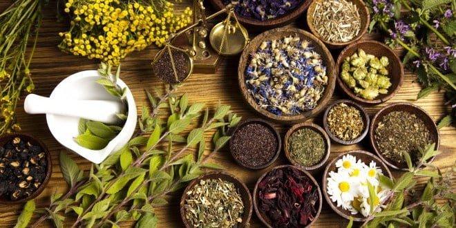 plantes-aromatiques-medicinales-plan-developpement-e1472467453628