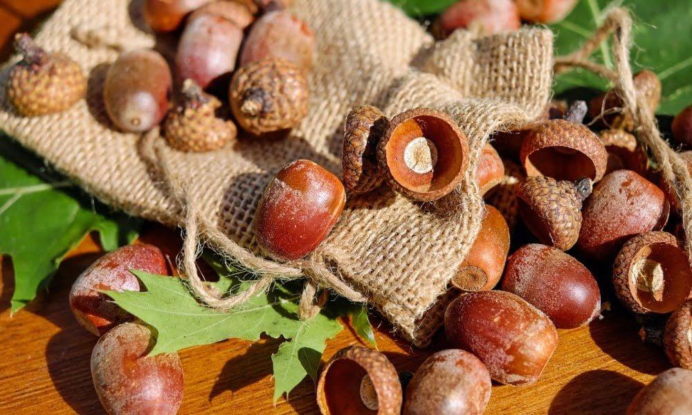 acorns-1715580_1280