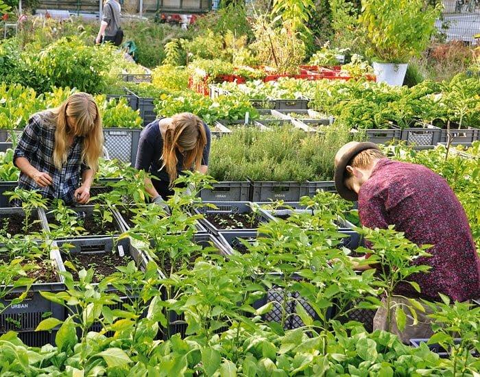 La Huertina De Toni Calendario De Siembra.Guia Rapida Para Empezar A Cultivar Tu Huerto Urbano Ideas Verdes