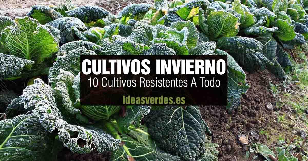 10 cultivos resistentes al frio