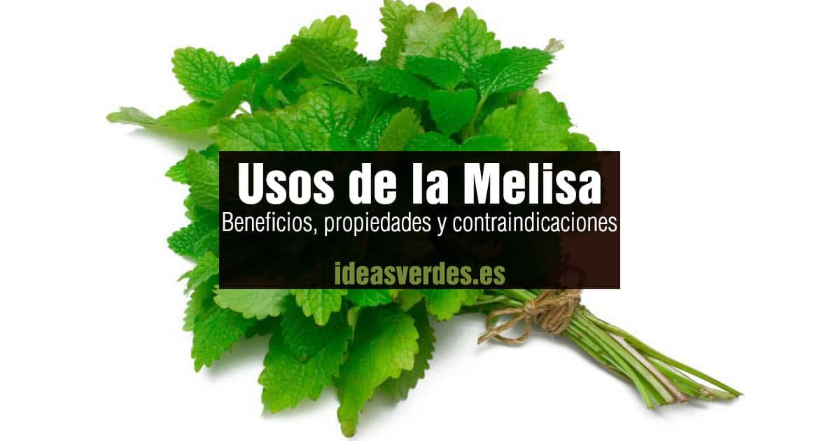 beneficios melisa
