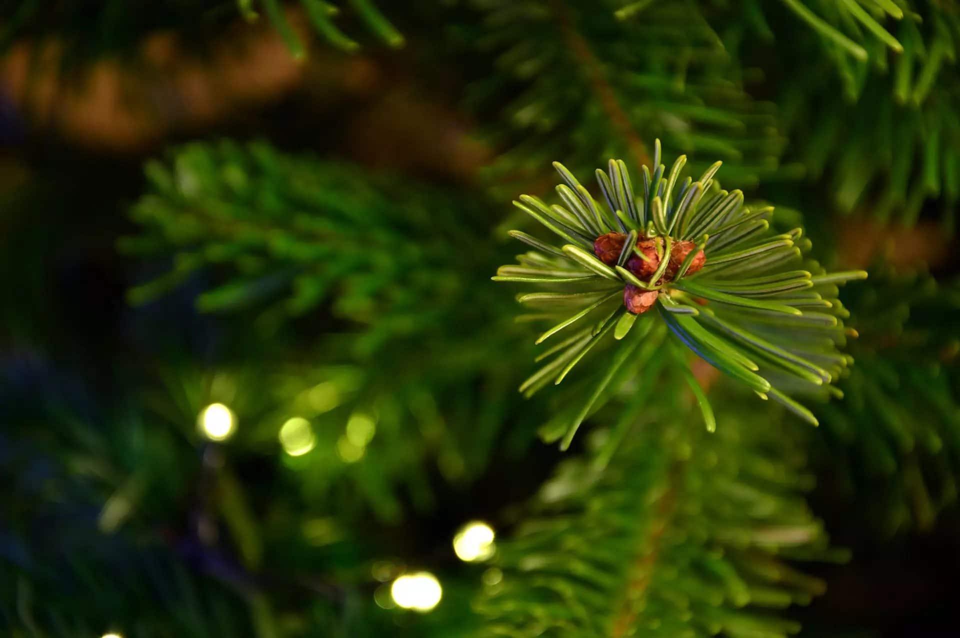 5 consejos para una Navidad ecológica