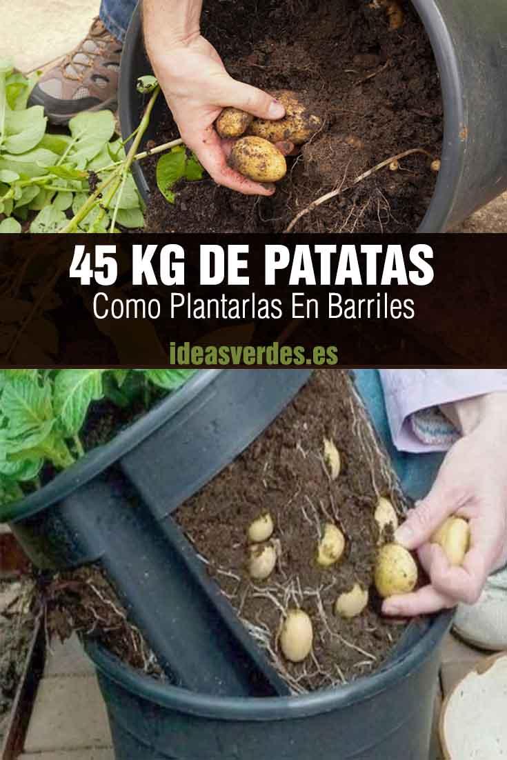 cultivar patatas en contenedor