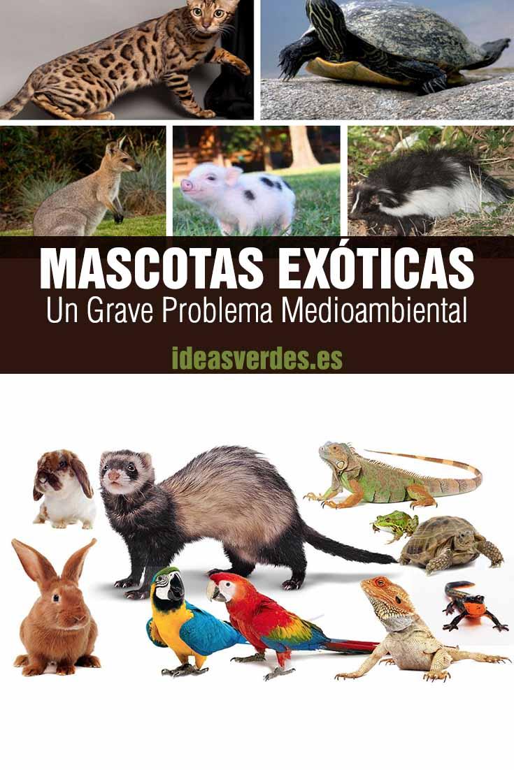 mascotas exóticas problema en el medio ambiente