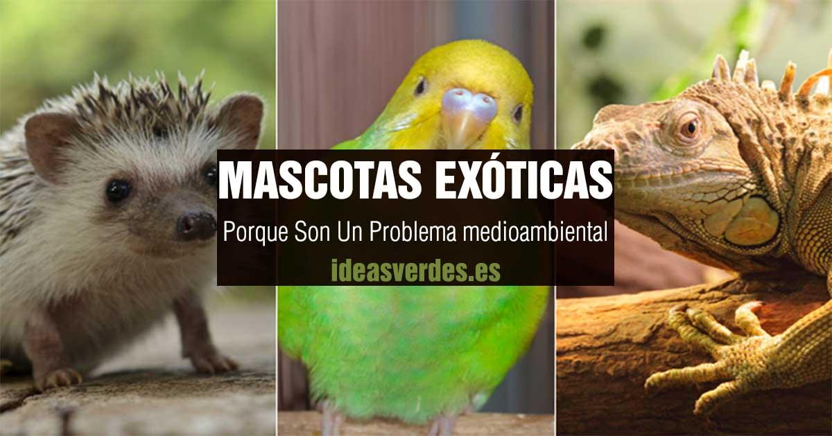 mascotas exoticas problema medio ambiental