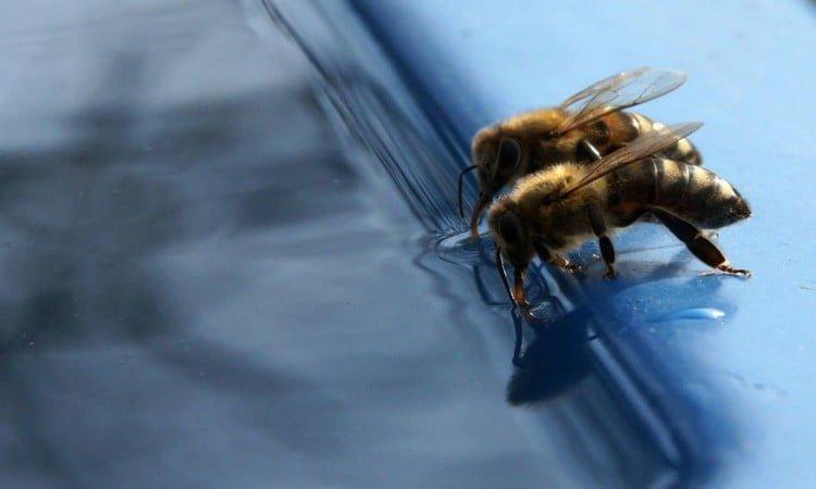 bebedero casero abejas