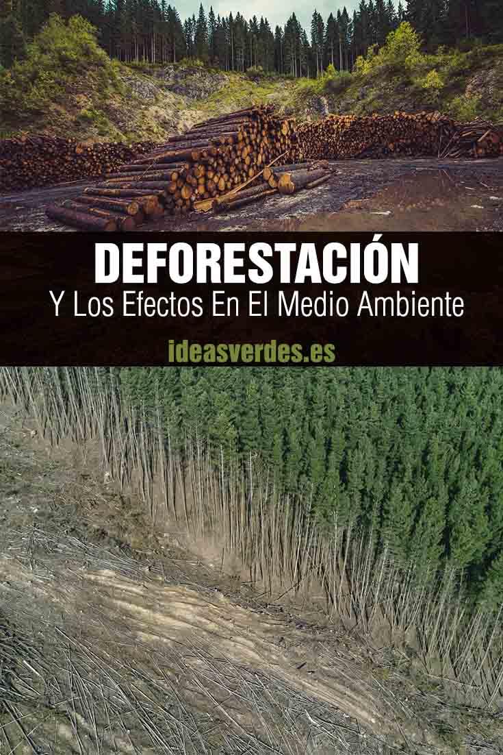 deforestacion y como afecta al medio ambiente