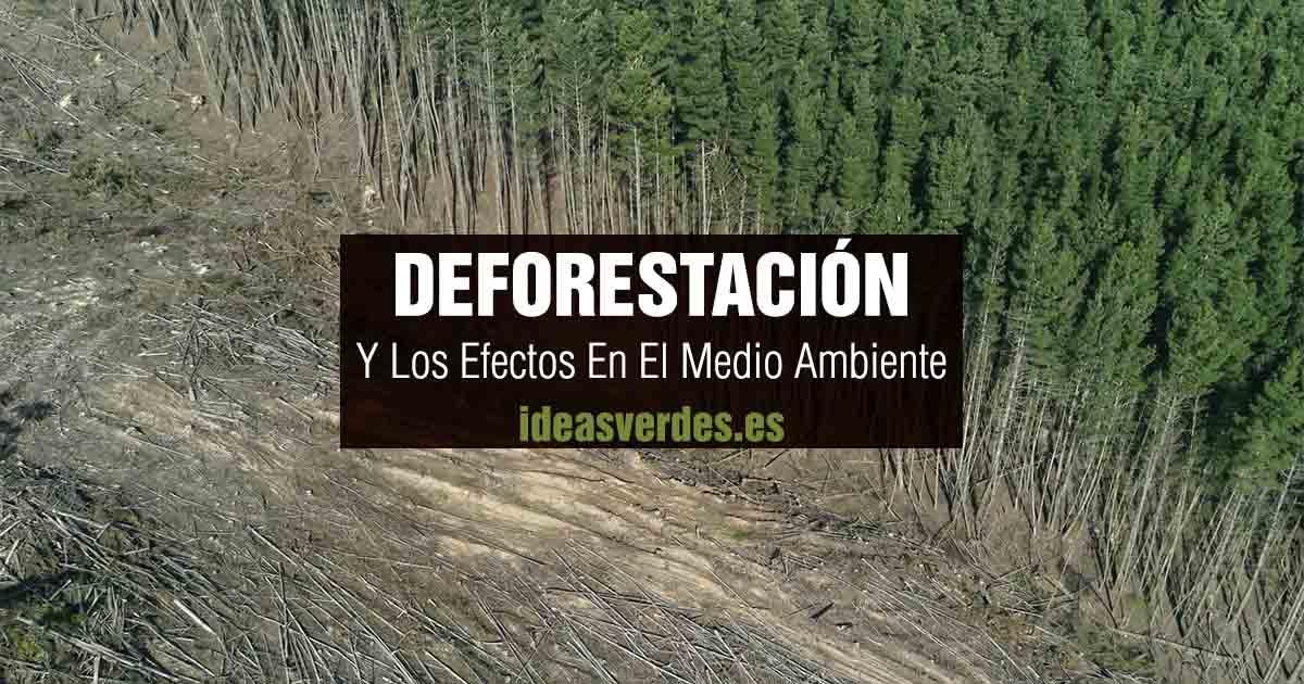 deforestación y los efectos al medio ambiente