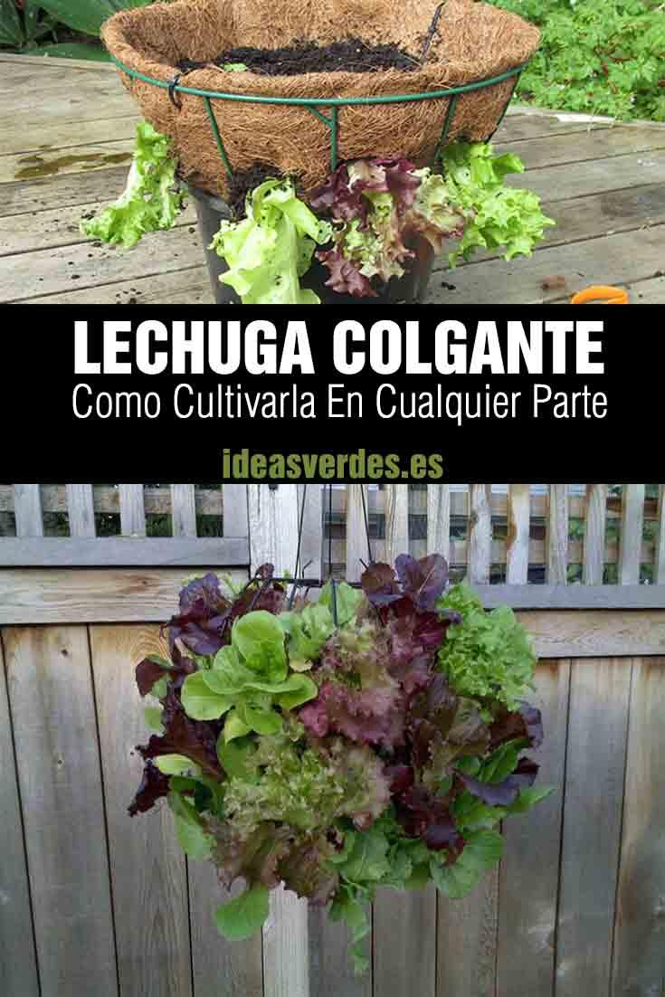 como cultivar lechuga colgada en la terraza