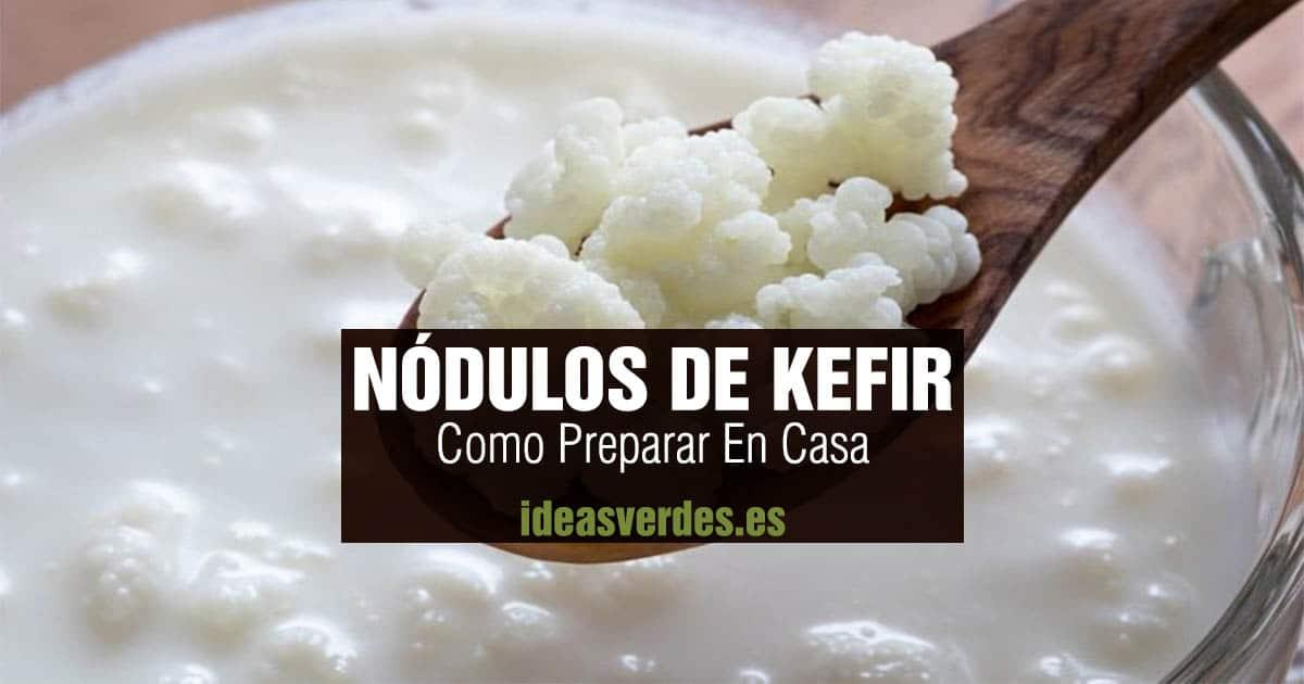 nodulos de kefir en casa