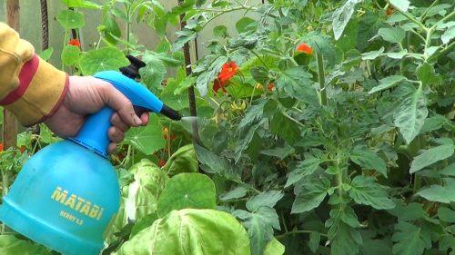 apichi insecticida