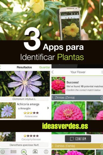 aplicaciones para identificar plantas