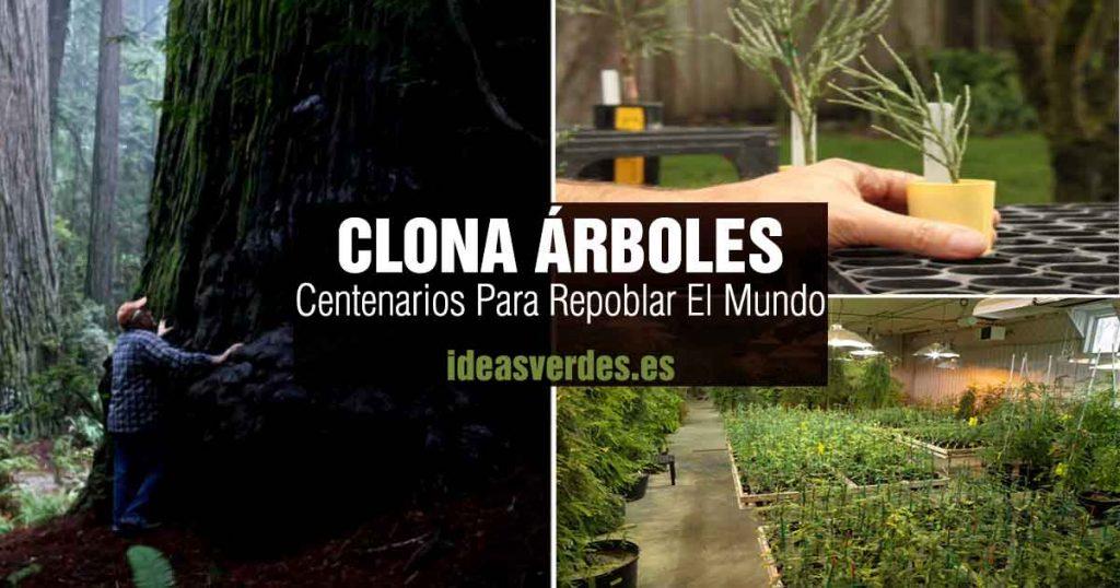 clonar arboles