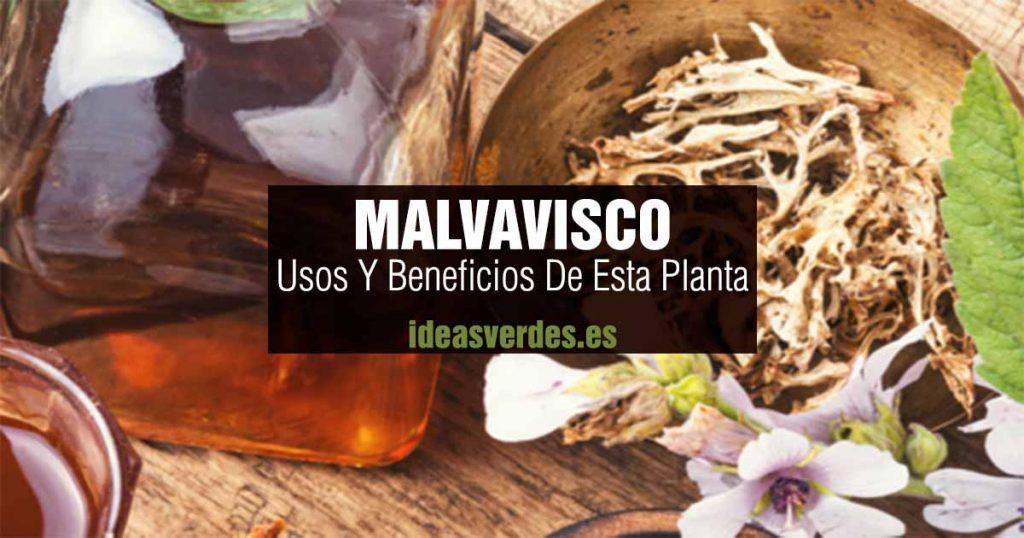 que es malvavisco usos y beneficios de esta planta
