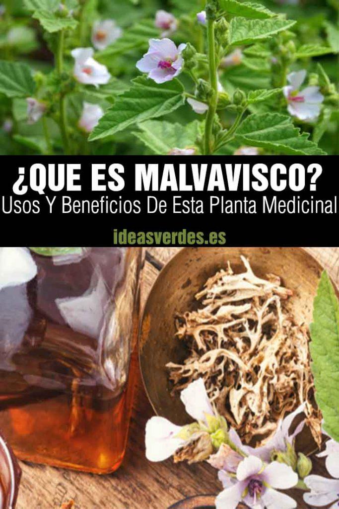 que es malvavisco usos y beneficios de la planta