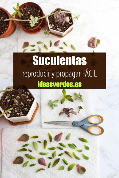 reproducción de suculentas por hojas