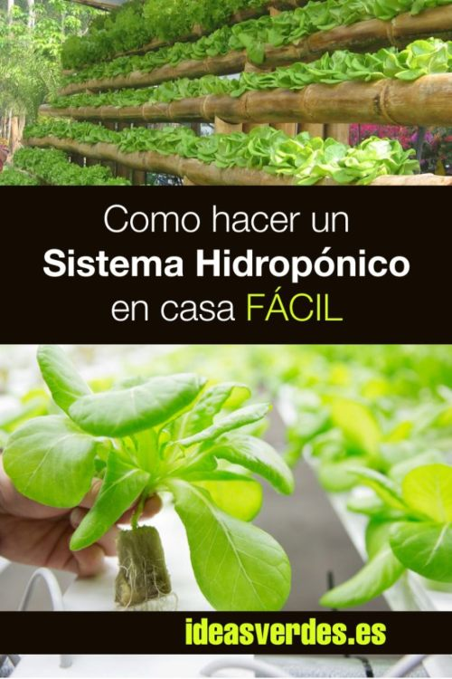 cultivo hidroponico casero
